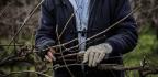Portrait Of A Soil Maker