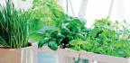 Urban Herbs
