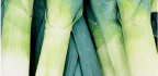 Speaking Of Leeks