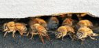 A BEE Haven
