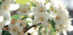 Spring Is A Great Time To Think About Planting New Trees And Shrubs