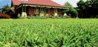 Selecting The Right Lawn For Your Yard And Your Needs Is The Key To Long-term Success