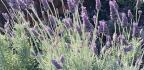 Plant Hardy Varieties