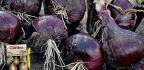 Grow Your Best Bulb Onions Ever!