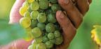 Grapes Made Easy