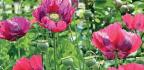 Planning An Edimental Garden