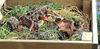 Superboost Your Compost Heap
