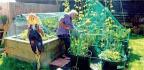 Gardening For Wellbeing