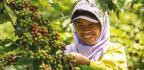 Reimagining Indonesia
