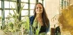 Uso Actual De Plantas Sagradas En Medicina Y Cosmética