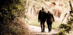Why Have Writers Neglected Elderly Lovers?