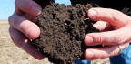 Let's Celebrate Soil! New Science and Stories for World Soils Day