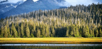 Alaskan Forests Show Resilience In Face Of Climate Change
