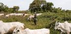 Herders Vs. Farmers