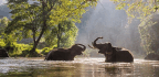 An Elephant's Personhood on Trial