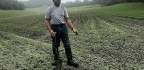 Millet Anyone? Facing Soil Crisis, US Farmers Look Beyond Corn And Soybeans