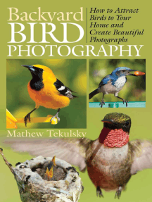 Backyard Bird Photography: How to Attract Birds to Your Home and Create Beautiful Photographs