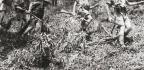 AUSTRALIAN INDEPENDENT COMPANIES & COMMANDO SQUADRONS