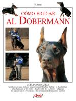 Cómo educar al Dobermann
