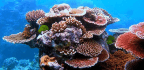 Living Coral, the Brutal Hue of Climate Change and Brand New iPhones