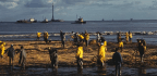 How California's Worst Oil Spill Turned Beaches Black And The Nation Green