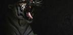 Notes of a Native Tiger Son, Part 1