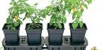 Garden Store Plus Subscriber Savers*