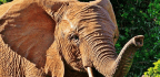 Four Southern African Nations Petition To Lift The International Ivory Trade Ban