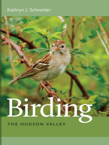 Birding the Hudson Valley