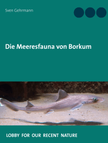 Die Meeresfauna von Borkum: Was lebt im Meer rund um die Insel?