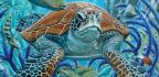 Green Turtle on Ribbon Reef