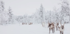 The Battle To Save Lapland