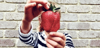 Team Uncovers Strawberry's Odd Evolutionary Origins