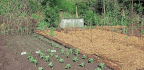 The Cultivated Plot