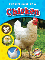 Life Cycle of a Chicken, The