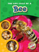 Life Cycle of a Bee, The