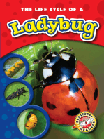Life Cycle of a Ladybug, The