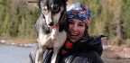 Blair Braverman And Her 'Ugly Dogs' Prepare For Her First Iditarod