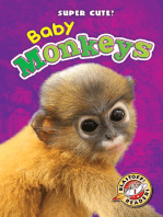 Baby Monkeys