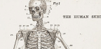Your Skeleton Reveals More About You Than You Think