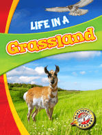 Life in a Grassland