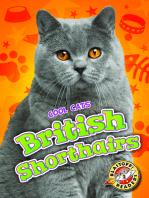 British Shorthairs