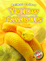 Yellow Animals