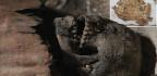 Encuentran Más De 40 Momias Egipcias En Tuna El-Gebel