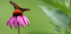 Pollinators Like Monarch Butterflies Need Your Help, Here's What You Can Do