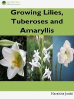 Growing Lilies, Tuberoses and Amaryllis
