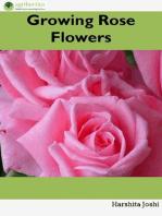 Growing Rose Flowers