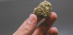 Daily Marijuana Use And Highly Potent Weed Linked To Psychosis