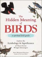 The Hidden Meaning of Birds--A Spiritual Field Guide
