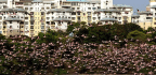 More Flamingos Are Flocking to Mumbai Than Ever Before. The Reason Could be Sewage